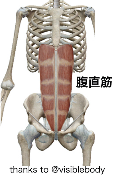 お腹の腹直筋という筋肉
